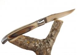Rounded Laguiole knife - blond horn tip handle - stainless steel bolsters
